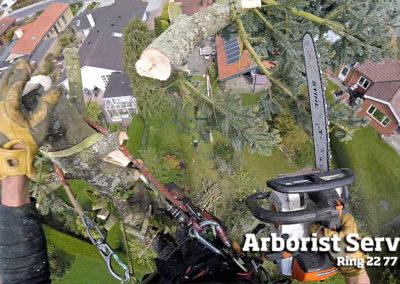Topkapning - Fældning af højt træ Odense Fyn