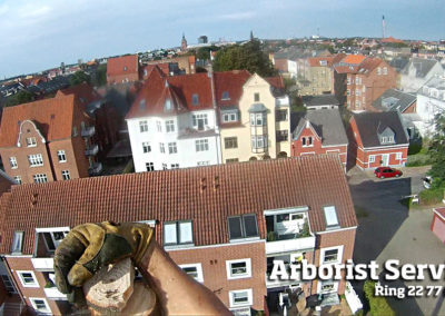 Træfældning - Arborist Service - Odense Fyn