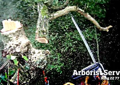 Topkapning - Træ med stormskade Odense Fyn