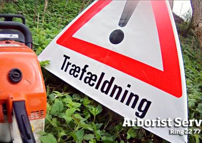 Træfældning - Topkapning Odense Fyn