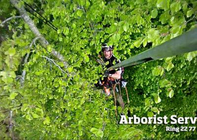 Arborist Service - Beskæring af træer Odense Fyn