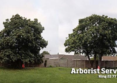 Kronereduktion - Beskæring af træer Odense Fyn
