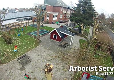 Træpleje - Styning af træer Odense Fyn