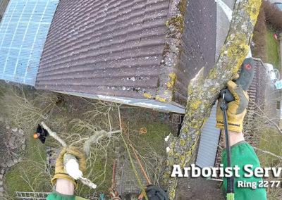 Delvis beskæring af grene over hustag Odense Fyn