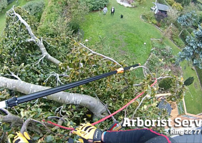 Kronepleje - Beskæring af træer Odense Fyn