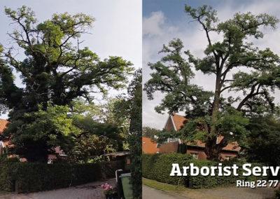 Kronepleje - fjerne/rense træer for efeu