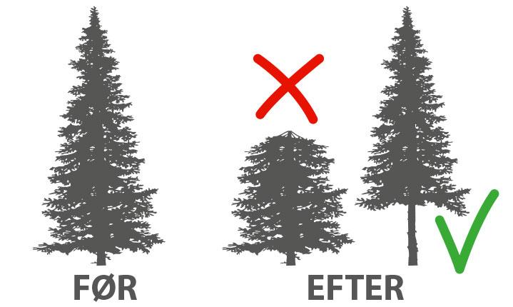 Træpleje_beskæring_af_træer_Odense