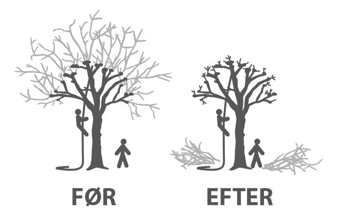 Beskæring_Styning_træ