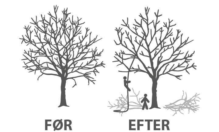 Beskæring_af_træ